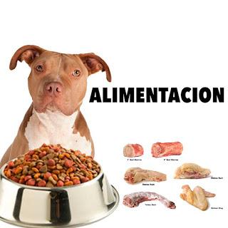 Cual es mejor comida para perros pitbull