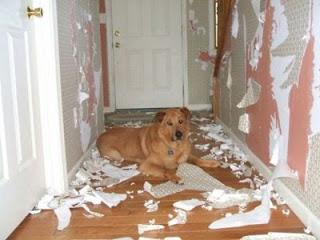 educación en los perros