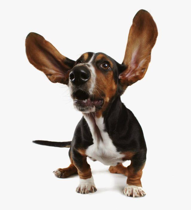 educando un perro sordos