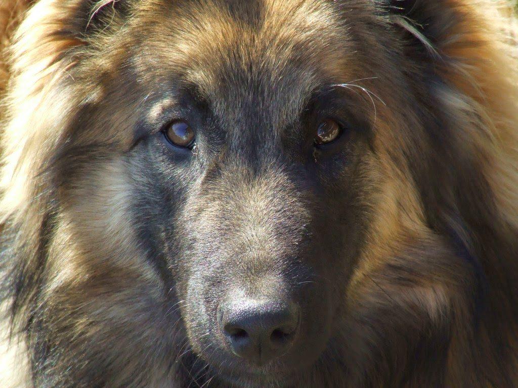 Las Mejores Frases Para Perros De Amorlealtad La Amistad