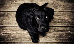 nombres de perros negros