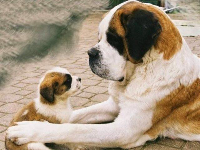 nombres para perros fuerte y duros