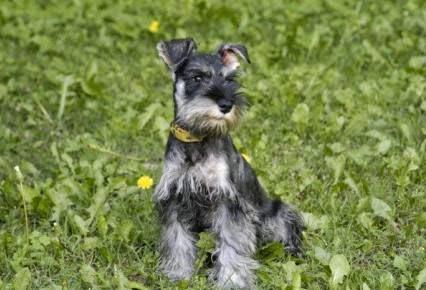 nombres para cachorro timidos
