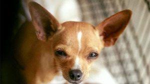nombres para perro pequeño