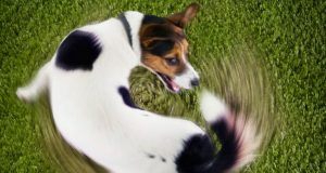 comportamiento canino