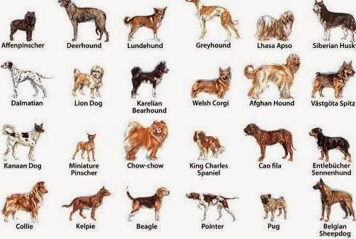 Mira Las Razas De Perros Medianos Que Tienes Que Ver Super 4 Patas