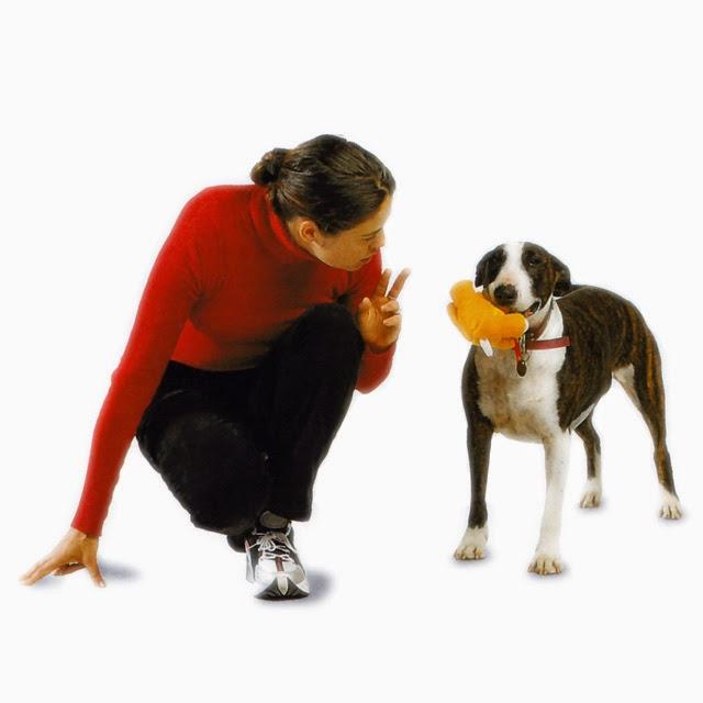 como castigar a un perro cuando se porta mal