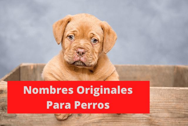 300 Nombres Originales Para Perros Machos Y Hembras 2021
