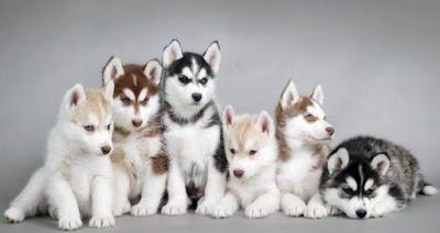 nombres para perro inteligentes