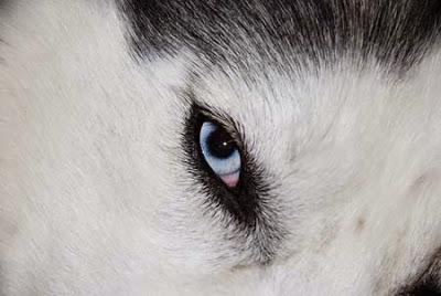 110 Nombres para perros husky MACHO O HEMBRA !   Super 4 Patas