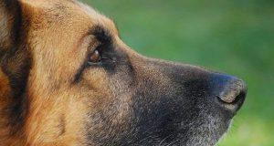 nombres para perro grandes
