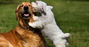 como controlar un perro traviezo