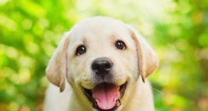 nombres para perro y su significado