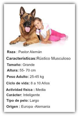 informacion del perro pastor aleman