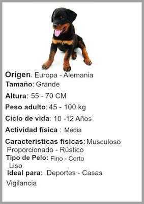 característica del perro Rottweiler