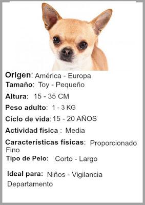 informacion de los perros chihuahua