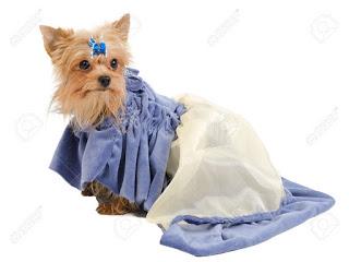 informcion del perro Yorkshire Terrier: