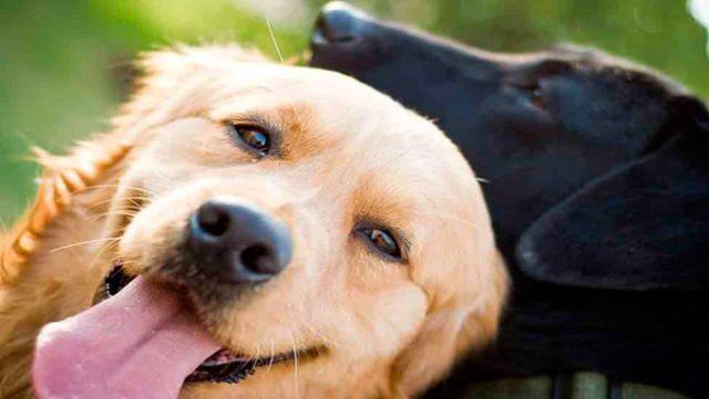Nombres cortos para perros,nombres para cachorros