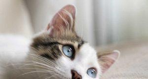 cuanto años vive un gato,cuanto viven los animales, que come un gato