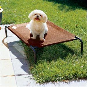 Cama elevada para mascota