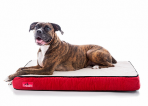 Cama impermeable para perro y gatos