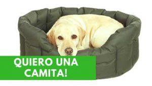 camitas para perros, camas originales, camas para perros mayores