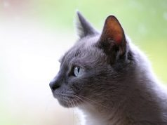 Nombres para gatos hembras ORIGINALES